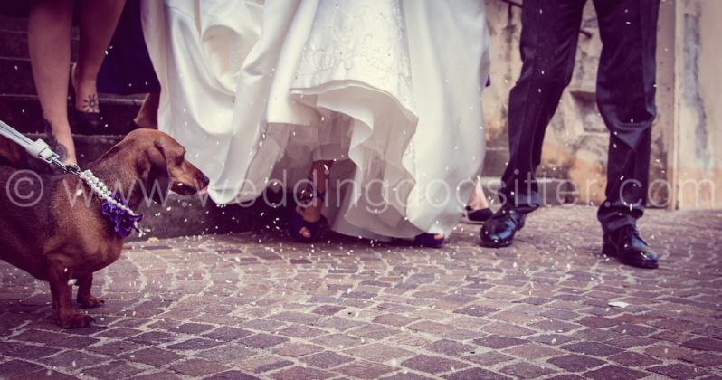 Photo Mario Caponera. il matrimonio con il cane