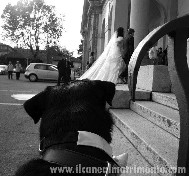 Photo: Chiara di Bene- il Cane BonTon -ingresso_sposa