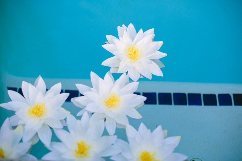 fiori in piscina _ Lisa Rigby Photography