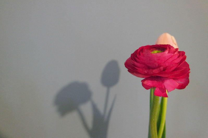 dettagli fiori